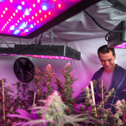 Benny Carrasco, a licensed medical marijuana caregiver and owner of Central Maine Flower, will move his plants from Bangor with an eye toward growing more plants for the recreational marijuana market once those rules are established.