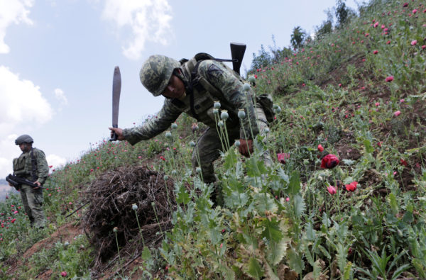 Soldiers destroy poppies during a military operation in the municipality of Coyuca de Catatlan in Mexico, Mexico April 18, 2017.
