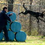 Dex, a Dutch-German shepherd mix set to become the Belfast Police Department's first police dog since 1989, leaps from an obstacle in an agility course at the Maine State Police K-9 Unit training center in Vassalboro. Belfast police officer Travis Spencer and Dex are one of six K-9 teams in the intense 14-week training program and scheduled to graduate in June.
