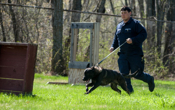 Dog Agility Training Maine