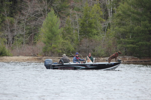 A dog serves as the lookout during a recent Penobscot Fly Fishers outing on Toddy Pond in Orland.