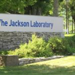 A woman walks toward the main entrance of The Jackson Laboratory, July 13, 2016.