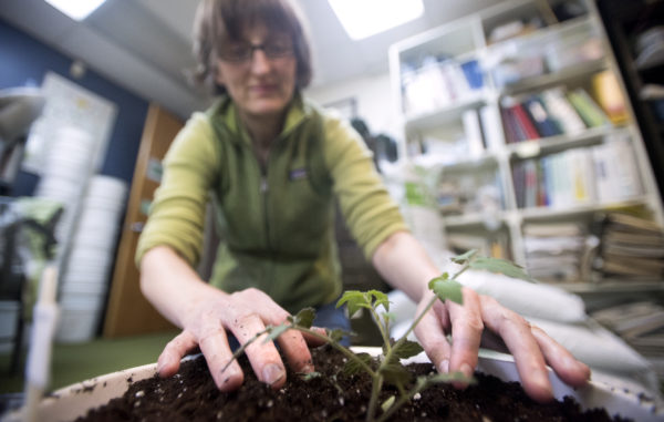 Kate Garland, horticulturist at the University of Maine Cooperative Extension, talks about how to plan the a possible layout for a small container garden.