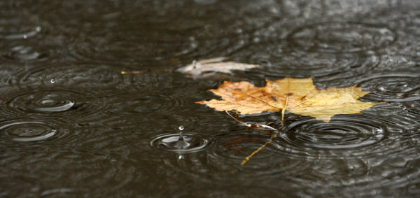 Rain collects in a puddle in Bangor.