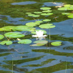 Join us for a complete overview of how to construct and maintain a pond that fits your desires!