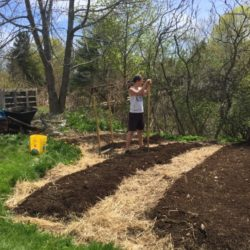 University of Maine students Elizabeth Daman, left, and Isaac Mazzeo, work at the Orono Community Garden on Saturday morning. &quotI love the garden project,&quot Mazzeo said.