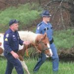 Friday morning, Maine State Police troopers caught an unusual pedestrian on the interstate in Palmyra.