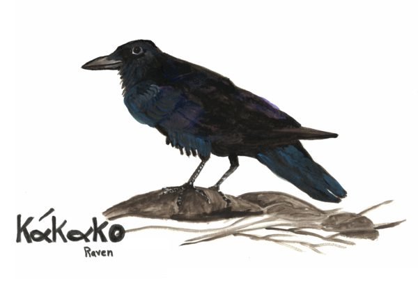 Penobscot Language Master Carol Dana painted a series of watercolors of indigenous birds each labelled with the bird's name in the Penobscot Language. Sixteen of Dana's watercolors will be displayed along the 1.4 mi walking trail at Erickson Fields Preserve.