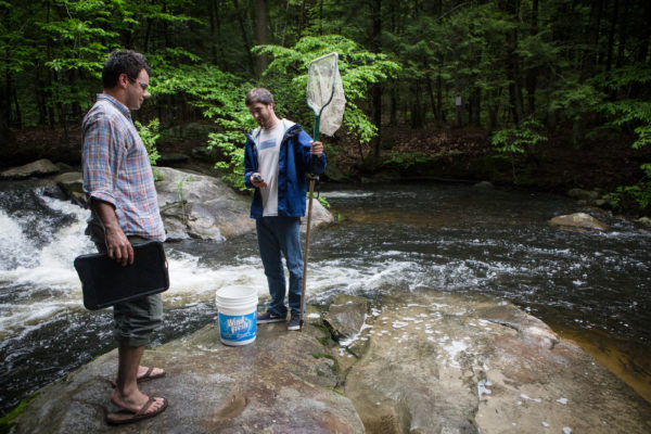 Zachary Whitener and Abe Lebel of the Gulf of Maine Research Institute gather alewives for testing on Mill Brook in Westbrook on Wednesday. The pair had no trouble catching the 25 they needed from the thousands gathered in the pool.