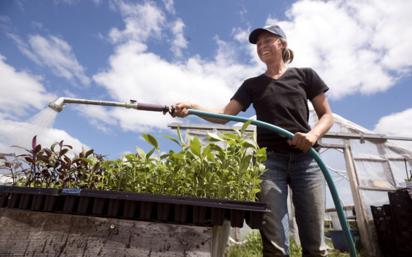 Carole Mapes waters flower seedlings before transplanting them into a field. Mapes is the current farmer-in-residence. She will grow about 50 varieties flowers this season. The residence program lasts two years, and she has access to MOFGA's agricultural resource base to establish her own business.