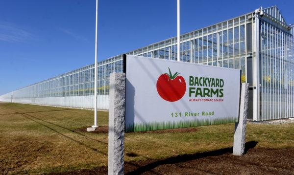 Canadian greenhouse giant buys Maine tomato grower Backyard
