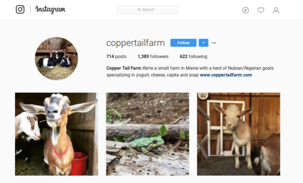 Copper Tail Farm uses Instagram to give their 1,300 followers a glimpse of daily farm life.