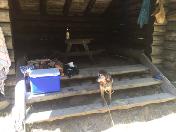 Molly surveys the landscape from the steps of the lean-to at Site 105  during a recent camping trip to Cobscook Bay State Park.