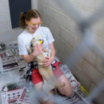BANGOR, Maine -- 06/20/2017 - Megan Morin gets kisses from Harper, one of the dogs from a Mississippi shelter up for adoption at the Bangor Humane Society in Bangor Tuesday. Morin and her mother took Harper home. All sixteen dogs that came up from overcrowded shelters in Mississippi were adopted in an hour and a half. Ashley L. Conti | BDN