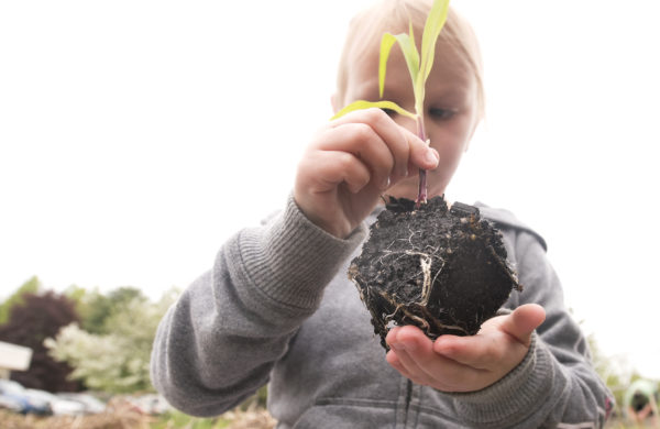 Etna-Dixmont Elementary School student Hailey Power, 5, holds a corn seedling before planting it in the school's vegetable garden, May 25, 2017.