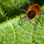 The recently discovered Bourbon virus and Heartland virus are two more reasons to avoid ticks. Infectious disease doctor Dana Hawkinson of the University of Kansas Health System talks about the dangers and how to avoid being infected.