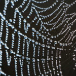 Drops of water are seen on a spider's web