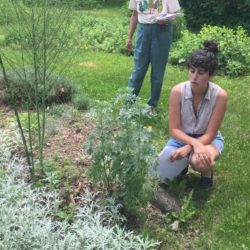 Denise DeSpirito, the gardens manager at Merryspring Nature Center in Camden, talks about one of the plants in the garden during a recent presentation on medicinal herbs.