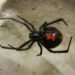 There's still no state budget, but we do have a black widow spider