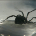Old Orchard Beach woman says she found black widow spider in grapes