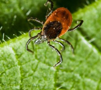 The development of Bayside, and a new reason to hate ticks