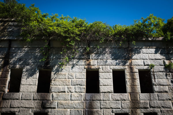 Vegetation grows atop the wall of Fort Gorges in Portland Harbor as windows from the old officers' quarters look out on a blue sky.