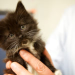 Lisa Smith of the Coastal Humane Society in Brunswick holds a kitten in a 2013 photo.
