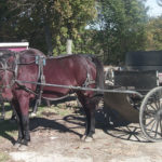 Horses and a buggy are pictured at an Amish farm in Thorndike in this 2009 file photo.