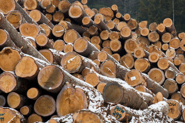 Lumber in a Maine woodlot.