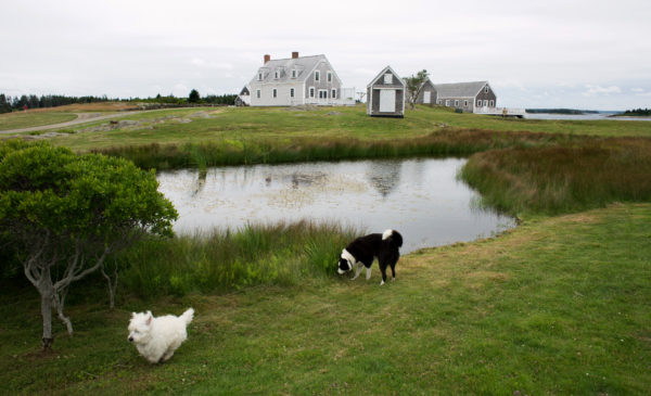 Island dogs Iggy (left) and Cody play on Allen Island. Iggy belongs to Jamie Wyeth and Cody belongs to David Morey, the island manager who lives there full time with his wife Amy, curator of the Andrew and Betsy Collection.