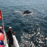 US suspends rescue efforts for entangled whales after Canadian fisherman dies