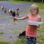 Rusty Metal Farm visitor Tempeste Boivin, 6, shares some leftover pizza with the resident flock of hens.