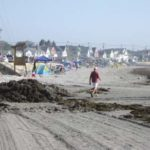 A man walks around a pile of seaweed on Long Sands Beach.