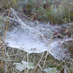 Spiders-a silent world