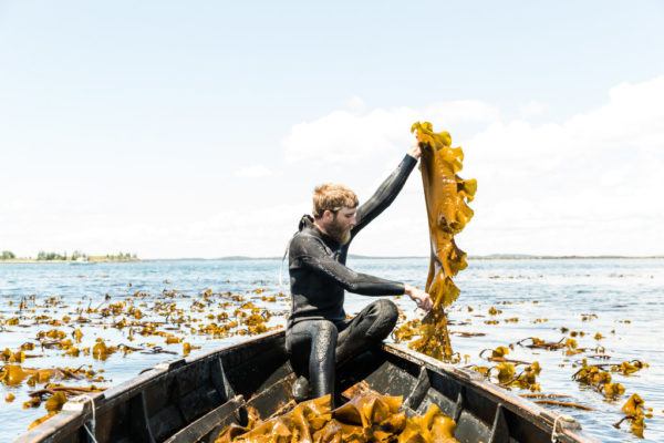 Seaweed Harvester Micah Woodcock harvests seaweed for his company Atlantic Holdfast Seaweed Company. He is one of 22 makers featured in new book &quotHandcrafted Maine.&quot