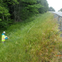 A biologist with the Maine Natural Areas Program surveys plants along a designated plot next to Interstate 95 as part of the Maine Department of Transportation's roadside invasive plants and pollinator study.