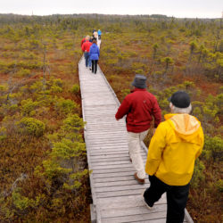 People walk on the Orono Bog Boardwalk shortly after it opened for the season, May 2012.