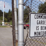 Some of the people who rent garden plots at the Bangor Community Garden have noticed that the vegetables are getting stolen this summer.