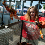 BDN coastal reporter Alex Acquisto lends a hand at the lobster cooking station at the Maine Lobster Festival in Rockland.