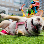 """A dog attends the America's first art show for dogs called """"Dogumenta"""" at the Manhattan borough in New York, U.S., August 11, 2017."""