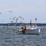 Some lobstermen worry that warming ocean temperatures threaten their catch.