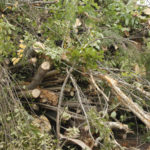 Tree tops and limbs removed during log harvesting will be fed through a chipper and converted into chips for biomass.