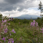 KATAHDIN WOODS AND WATERS NATIONAL MONUMENT, Maine -- 08/10/17 -- on Aug. 10, in the Katahdin Woods and Waters National Monument. (Aislinn Sarnacki | BDN)