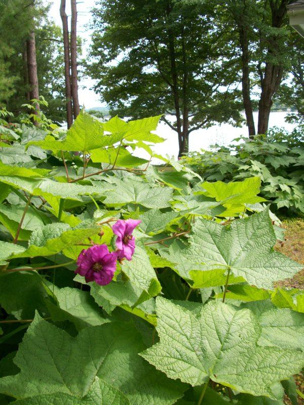 Garden By The Bay August 2017 belfast open garden days finale features a transformed garden