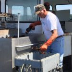 Rock Alley sorts his catch aboard the Miss Carmen at a Beals Island dock.