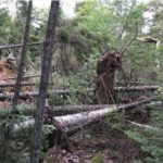 Two tornadoes swept through isolated stretches of Maine on Saturday.