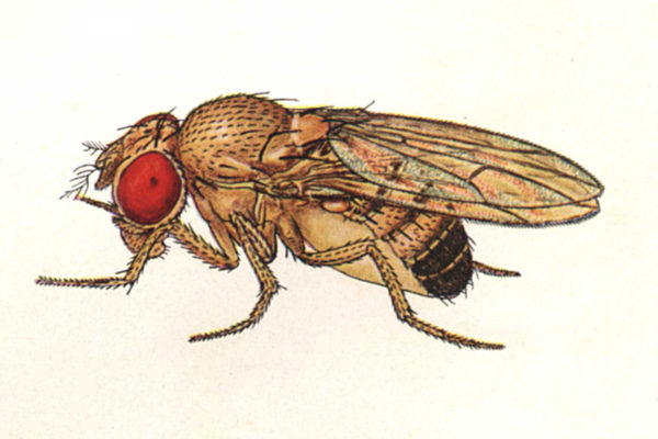 When fruit flies take over your kitchen, here\'s what you need to ...