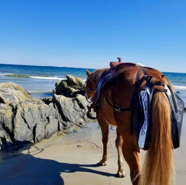 Maine town decides against requiring horses to wear diapers on the maine town decides against requiring horses to wear diapers on the beach sciox Choice Image