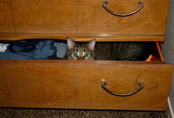 Police Identify Cat Suspect
