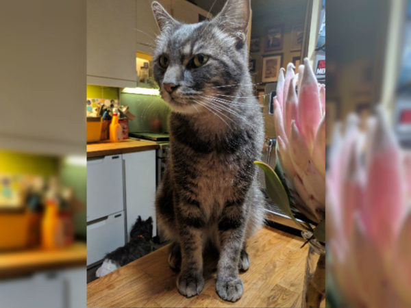 Missing Maine Cat Crashed A Wedding Went To College And Broke - Missing cat gets found next to his own missing cat poster